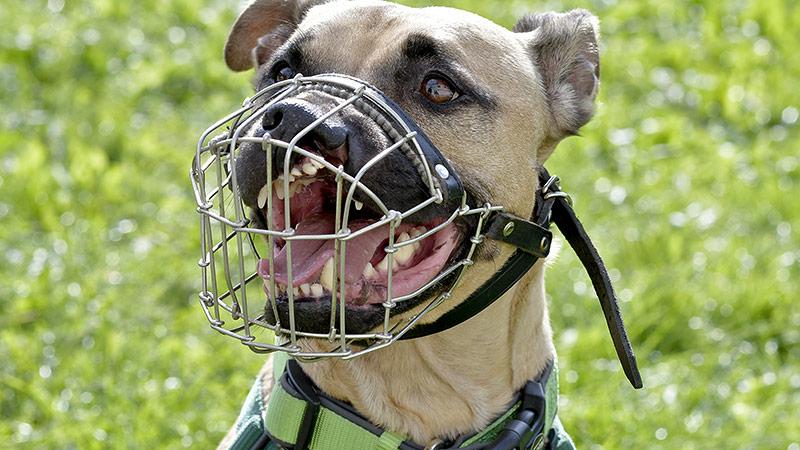 Hund mit Beißkorb
